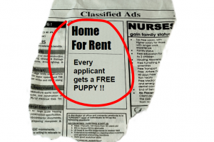 10 Simple Steps For Writing the Perfect Rental Ads