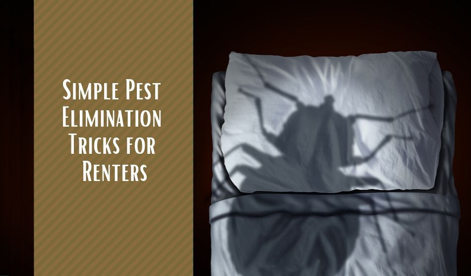 Pest Elimination Tricks for Renters