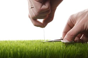 The Lay of the Lawn: Rules and Responsibility for Lawn Care