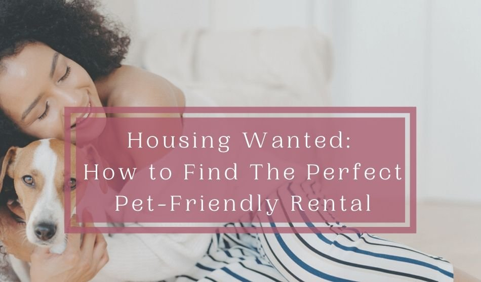 how to find a pet friendly rental