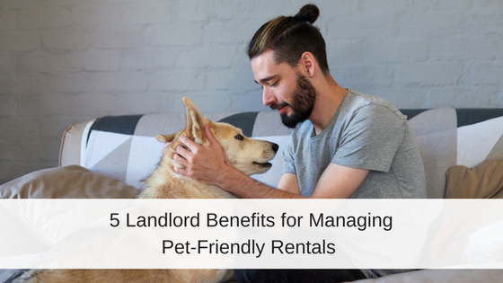 5 Reasons You Should Allow Pets at Your Rental Property