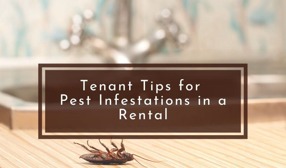 Tenant Tips for Pest Infestations in a Rental