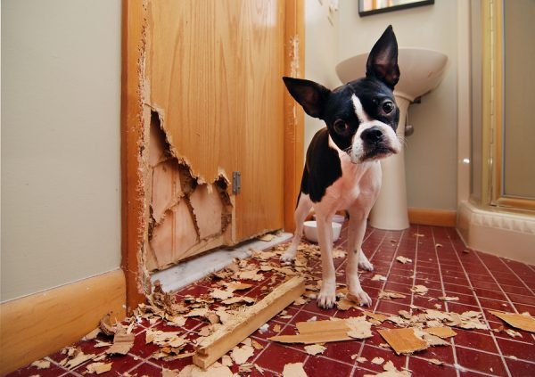 puppy damages home