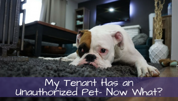 My Tenant Has an Unauthorized Pet - Now What?