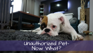 unauthorized pet