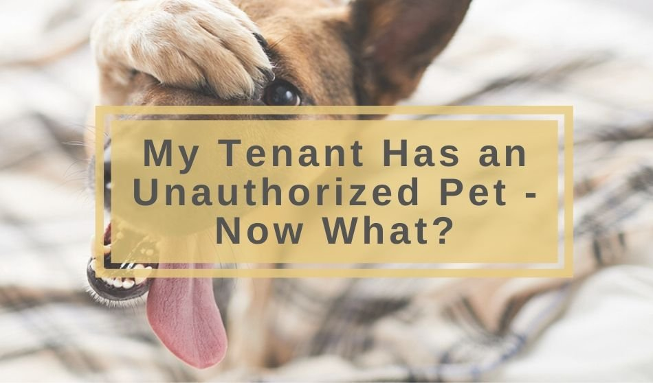 My Tenant Has an Unauthorized Pet – Now What?