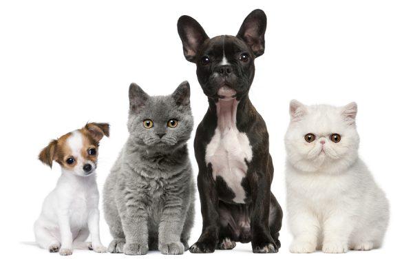 rentals and pets
