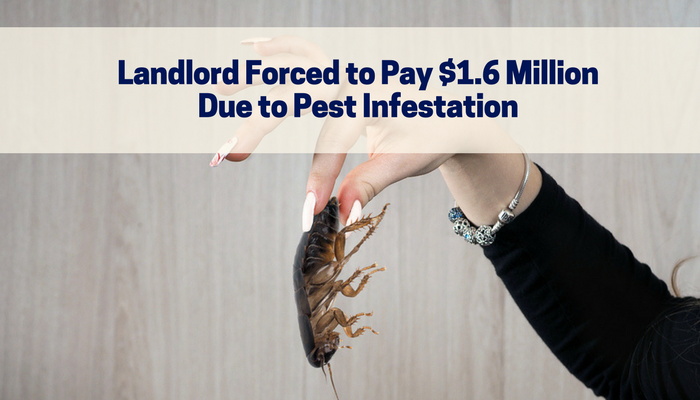 Landlord Forced to Pay $1.6 Million Due to Pest Infestation