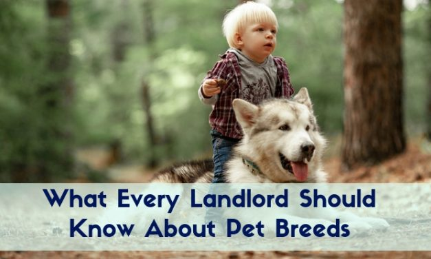 What Every Landlord Should Know About Pet Breeds