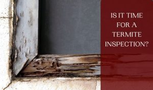 Is it Time for a Termite Inspection