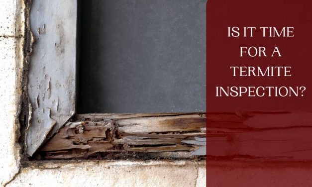 Is it Time for a Termite Inspection?