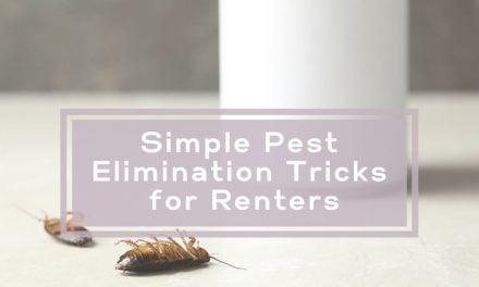 Simple Pest Elimination Tricks for Renters