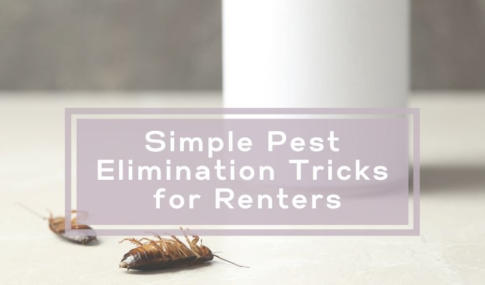 Simple Pest Elimination Tricks for Renters