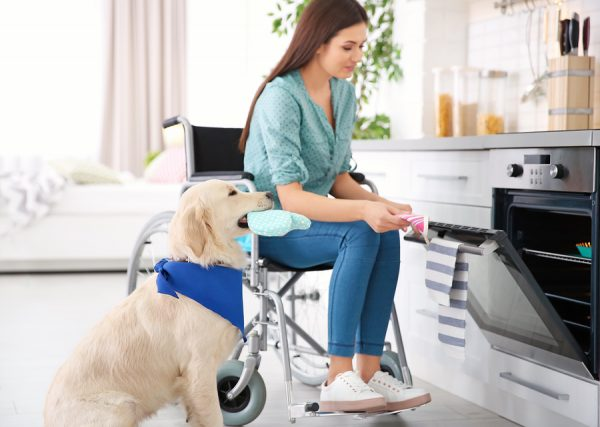 Trained service animals help individuals with disabilities perform tasks