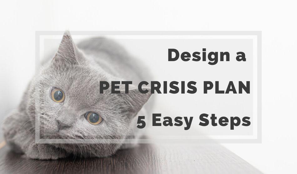 Design a Pet Crisis Plan in 5 Easy Steps