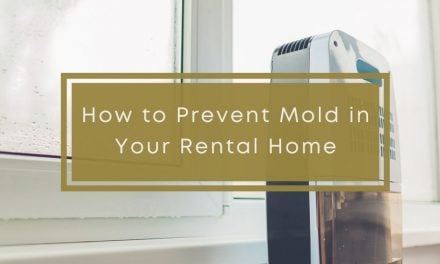 How to Prevent Mold in Your Rental Home
