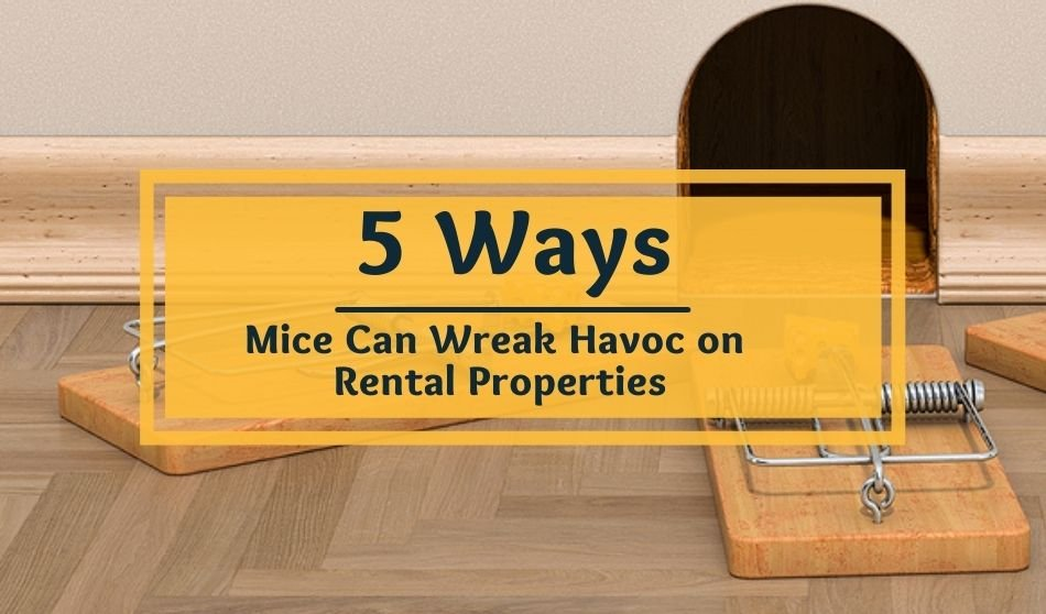 mice at your rental property